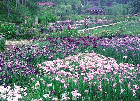 Takitani Iris Gardens